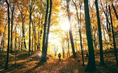 Los 4 mejores sitios para relajarse en la naturaleza cerca de Madrid.